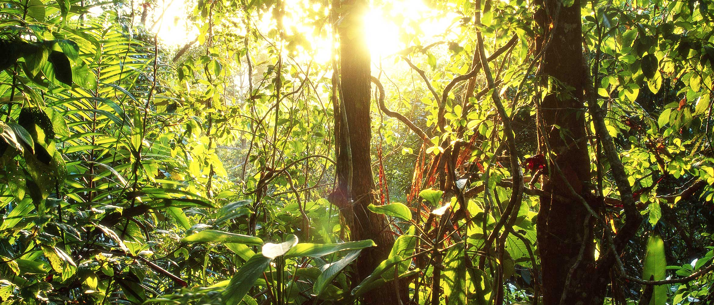 Leafy green jungle illuminated by sun's rays