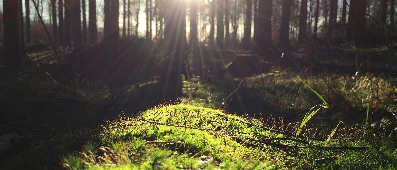 okolje-certifikati-sončna-jasa-v-gozdu