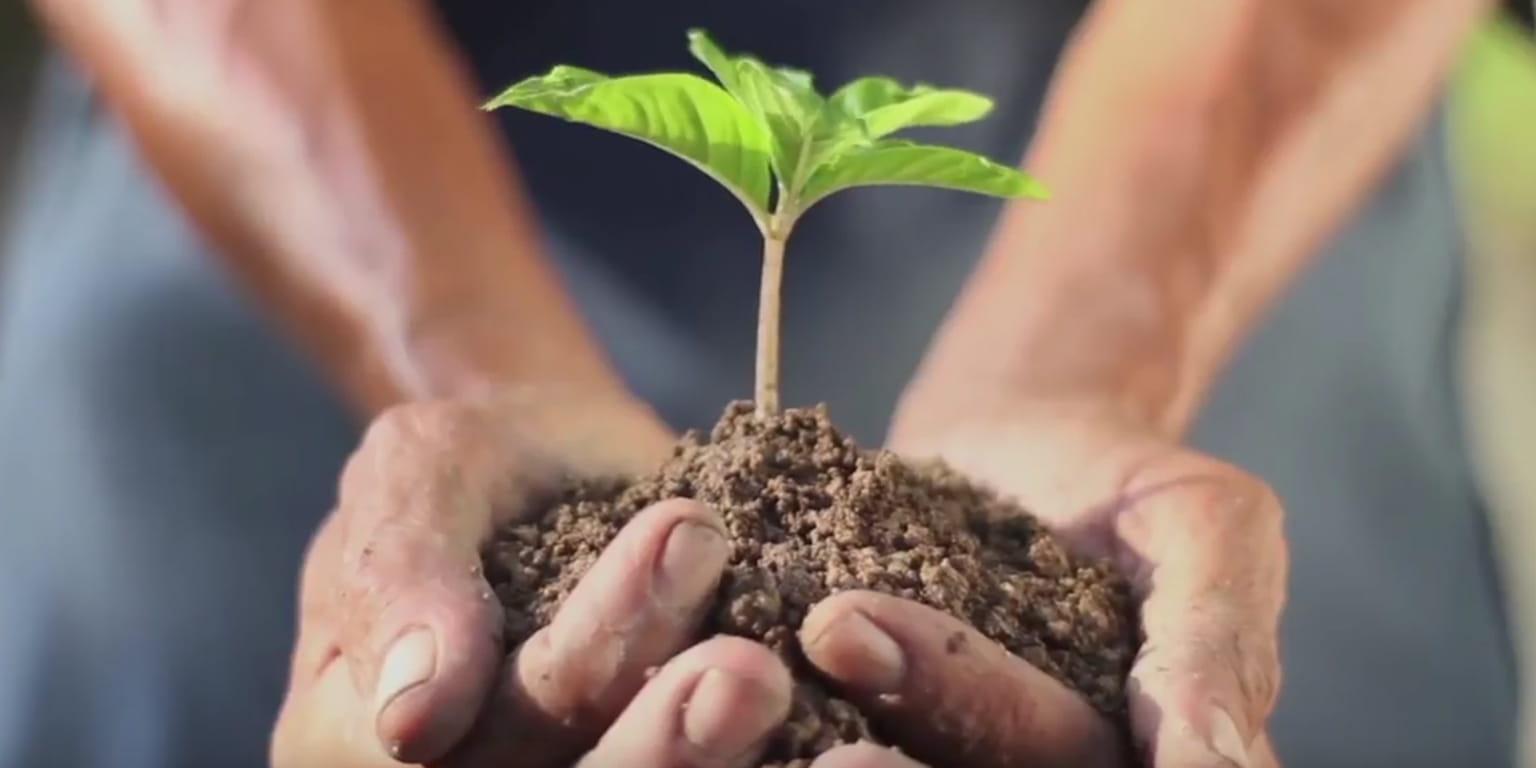 Recikliranje-oseba drži v dlaneh rastlino v zemlji